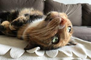 Betriebsferien - Katze liegt auf dem Rücken